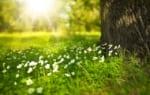 千葉で樹木葬が可能な霊園・墓地おすすめ10選! 料金相場をチェック