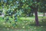 大分で樹木葬が可能な霊園・墓地おすすめ5選! 料金相場をチェック