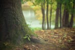山梨で樹木葬が可能な霊園・墓地おすすめ7選! 料金相場をチェック