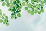 岐阜で樹木葬が可能な霊園・墓地おすすめ3選! 料金相場をチェック