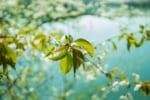 鹿児島で樹木葬が可能な霊園・墓地おすすめ3選! 料金相場をチェック