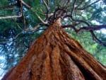 広島で樹木葬が可能な霊園・墓地おすすめ10選! 料金相場をチェック