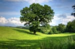 愛知で樹木葬が可能な霊園・墓地おすすめ10選! 料金相場をチェック