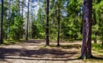 高知で樹木葬が可能な霊園・墓地おすすめ9選! 料金相場をチェック