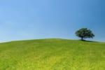 三重で樹木葬が可能な霊園・墓地おすすめ8選! 料金相場をチェック