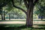 福岡で樹木葬が可能な霊園・墓地おすすめ10選! 料金相場をチェック