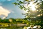 愛媛で樹木葬が可能な霊園・墓地おすすめ2選! 料金相場をチェック