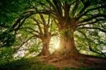 長崎で樹木葬が可能な霊園・墓地おすすめ2選! 料金相場をチェック