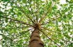沖縄県で樹木葬が可能な霊園・墓地おすすめ2選! 料金相場をチェック