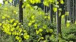 島根で樹木葬が可能な霊園・墓地おすすめ4選! 料金相場をチェック