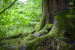 静岡で樹木葬が可能な霊園・墓地おすすめ10選! 料金相場をチェック
