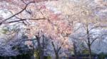 熊本でおすすめの霊園・墓地10選! お墓の種類と料金相場をチェック