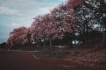 石川で樹木葬が可能な霊園・墓地おすすめ3選! 料金相場をチェック