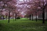 福井で樹木葬が可能な霊園・墓地おすすめ5選! 料金相場をチェック