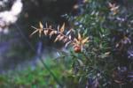 徳島で樹木葬が可能な霊園・墓地おすすめ5選! 料金相場をチェック