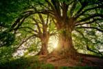 大阪で樹木葬が可能な霊園・墓地おすすめ10選! 料金相場をチェック