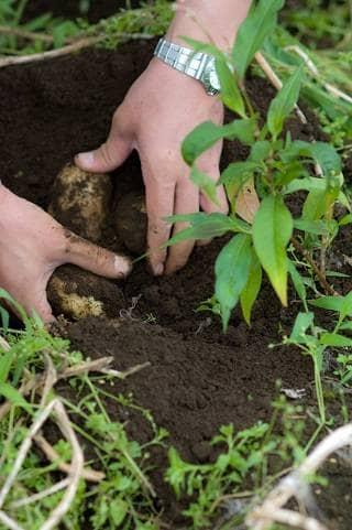 掘り 根 意味 葉 掘り