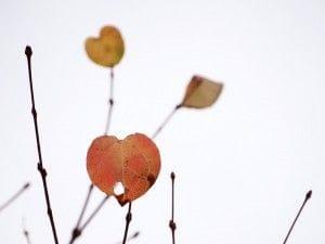 ハート型の枯れ葉