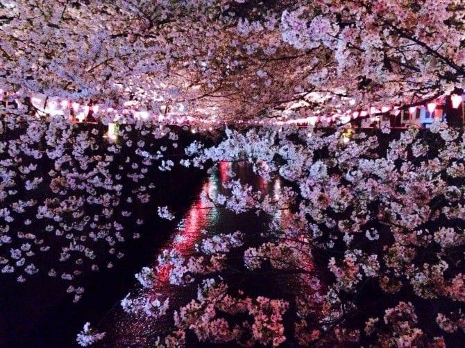 目の前がピンク一色に染まる幻想的なライトアップ