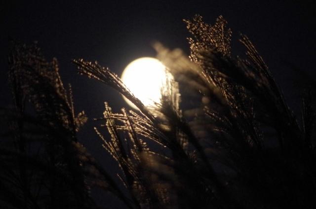 月が綺麗ですね 意味 女性