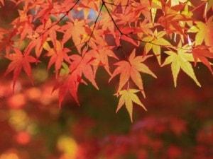 紅葉が楽しめるスポット