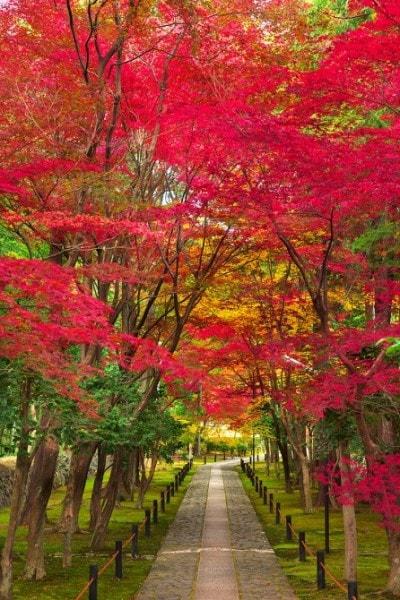 山門から100メートルほど続く参道には、苔が敷き詰められている