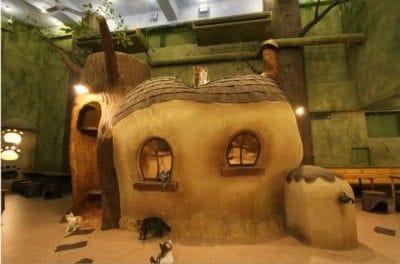 ツリーハウスの周囲には、猫たちが自由に屋根に登れるように、キャットウォークが設置されています