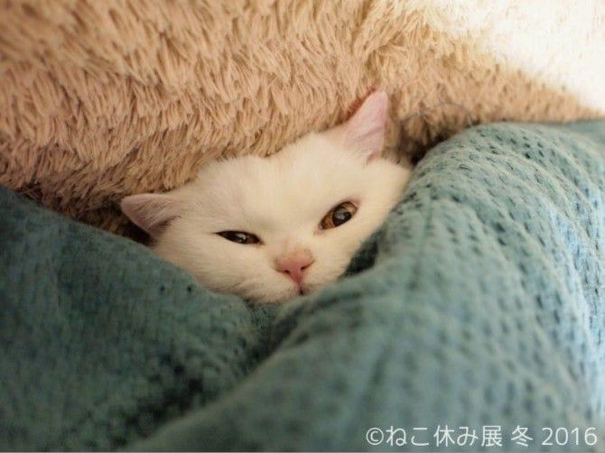 一緒に毛布にくるまりたい!