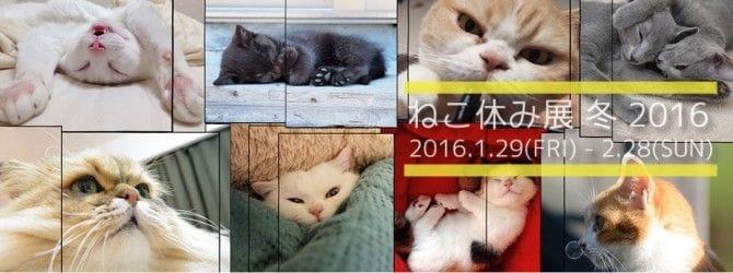 猫だってお休みしたい! 「ねこ休み」展