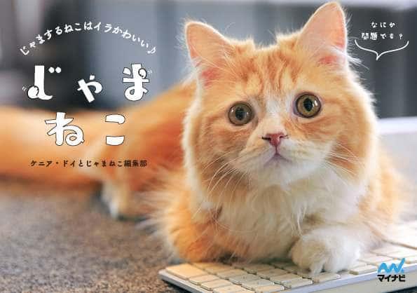猫写真集『じゃま猫』の撮影秘話を聞いてみた