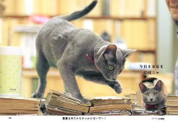 基本猫には近づかないで望遠レンズで撮影するというケニアさん(『じゃまねこ』P18より)