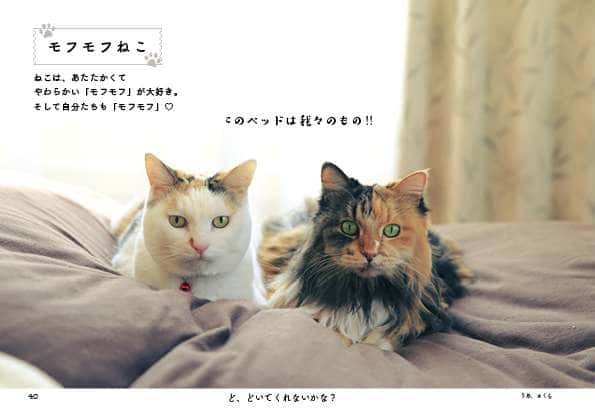 『じゃま猫』40ページより