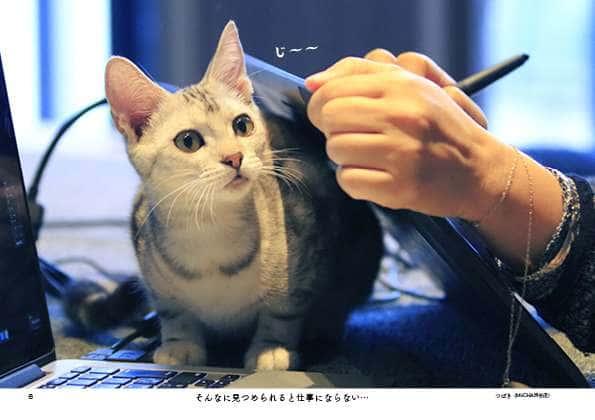 PC作業をしていると邪魔しにくるという猫(『じゃまねこ』P6より)