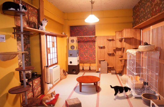 店内の様子。猫スタッフはみんな新しい家族を募集中!