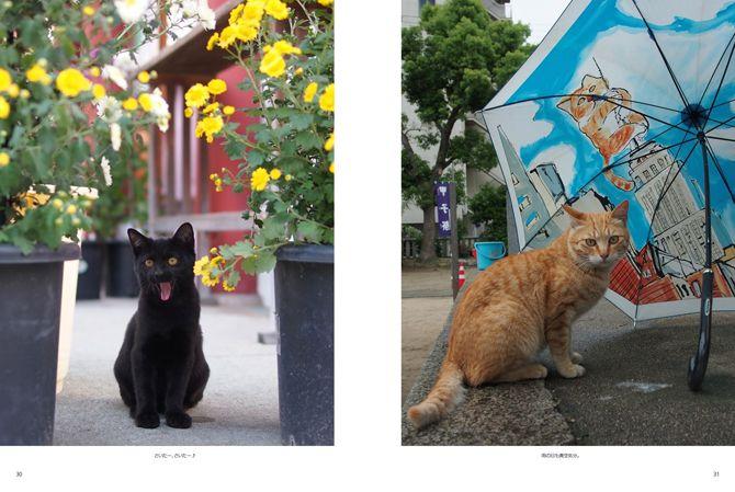 街の風景に溶け込む猫たち http://www.photoback.jp/Stage/Photoback/PBER-2511281412200244160 ※30~31ページ目(青い傘のある写真)