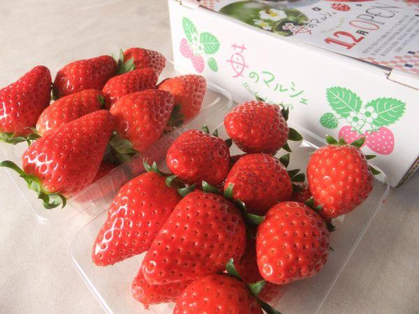 朝採り・完熟イチゴの販売は10時から