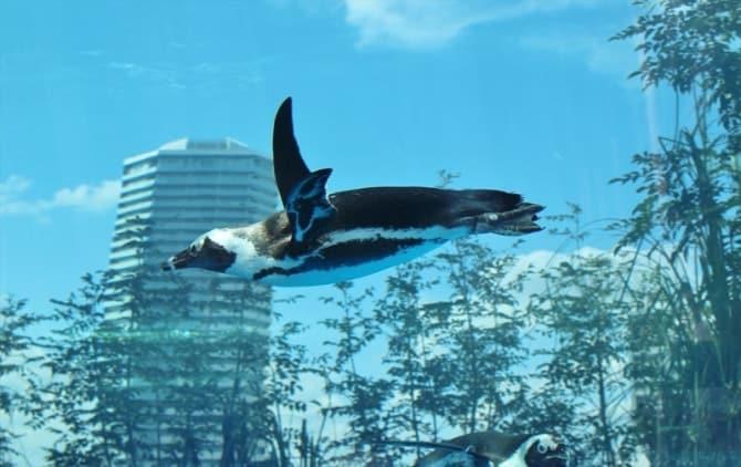 都会の空を飛んでいるように見えるペンギン。