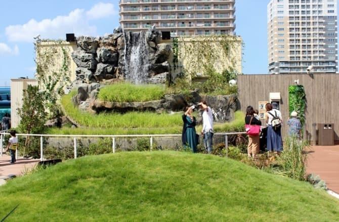 草原のペンギンの展示。
