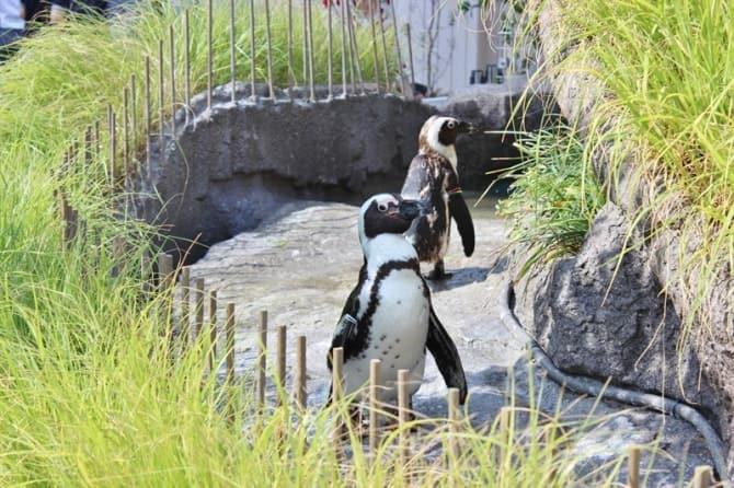 都会の真ん中で仲良く暮らすペンギンの姿。