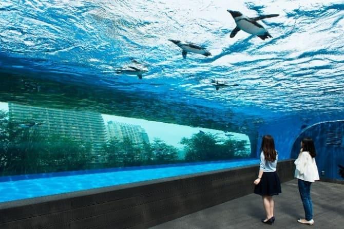 幅約12mの巨大水槽内で自由に泳ぐケープペンギン。