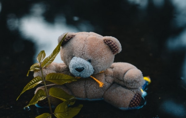られる くま に 夢 追いかけ 【夢占い】白熊(シロクマ)|白熊の夢が意味するものとは