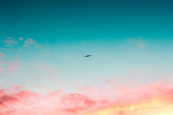 鳥 夢占い