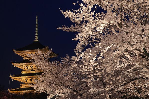 """心にゆとりができる、春に行く""""オトナの京都旅""""のすすめ"""