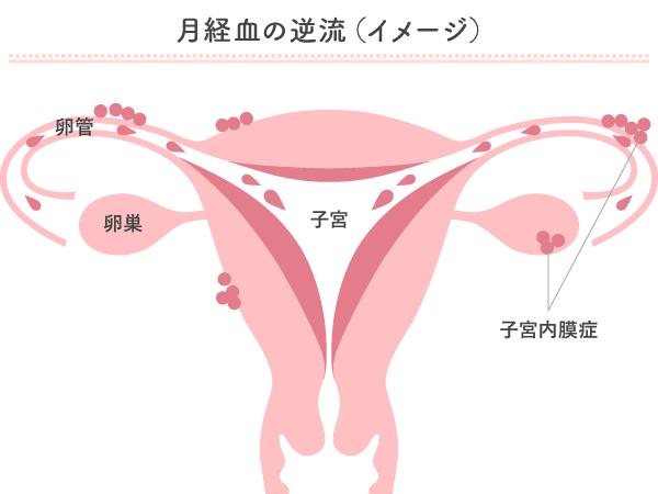 生挿入 妊娠確率