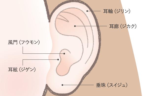【人相学】耳の各部分の名前と意味