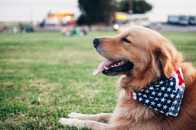 【心理テスト】もし犬だったら飼い主に何て言いたい? 「あなたのストレス解消法」