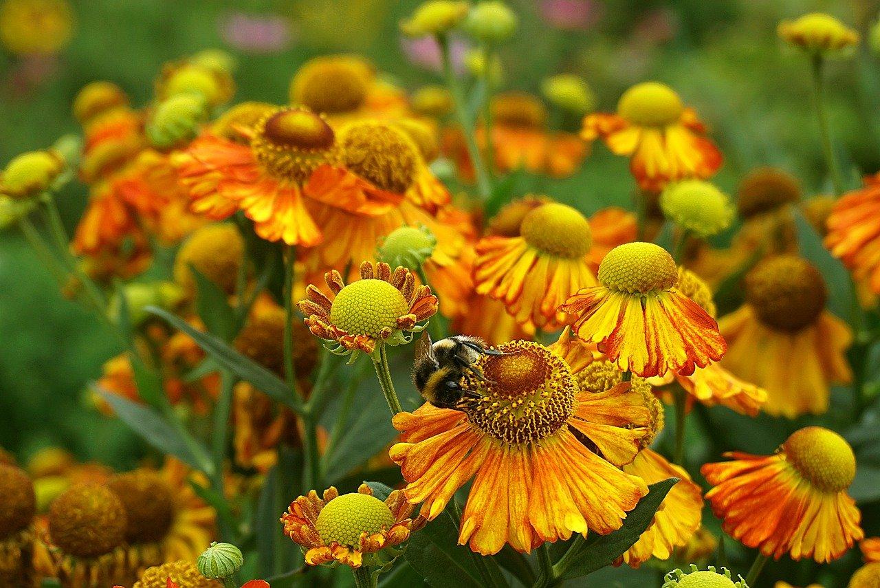 夢 占い 蜂 に 刺され た 夢 占い 蜂 に 刺され た 【夢占い】蜂(ハチ)の夢の意味29選!刺される・追いかけられる・蜂の巣・壊すなどパターン...