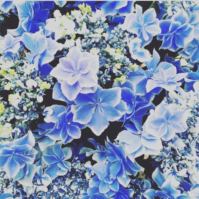 ✧*。ネモフィラ。*✧ . . success anywhere という花言葉もある。 . . こんなにかわいい花なのに、 込められた意味が強くて驚き。 . . 花言葉を知ったらますます好きになる。 . . 梅雨もあと2週間で終わって、夏が来る。