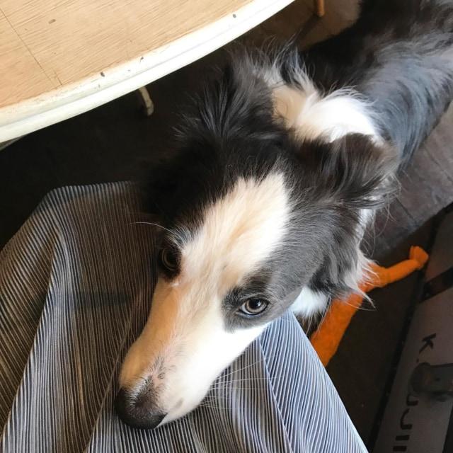 . 🦮  読みたい本があったけど、家だとなかなか進まなくて。  ワンコのいるカフェに行ったけど、お客は私1人なのでとっても静か🙆♀️ さらにワンコと戯れてとっても癒された。 ※犬のなでしこちゃんはとっても甘えてきます笑  #犬 #いぬすたぐらむ  #カフェ #カフェ巡り